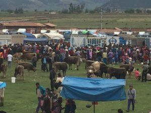 Friday cattle market, Anta
